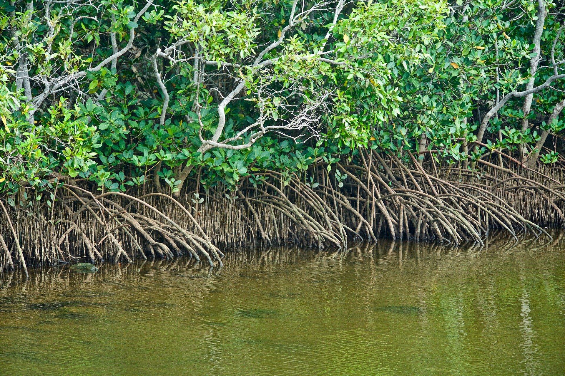Mudanças No CONAMA E A Fragilização Da Proteção Ao Meio Ambiente No Brasil