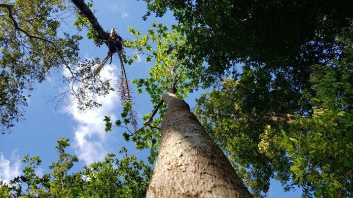 Iniciativa Vai Investir R$ 24 Milhões Em Produtores Que Conservarem Amazônia