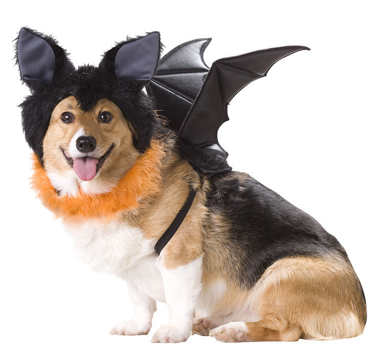 PET20103-Bat-Dog-Costume-large