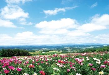 麓郷展望台|名所・景観|見る・楽しむ一覧|ふらの観光協会公式サイト ふらのindex