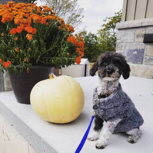 Ollie is looking all cozy for fall in his knittedhellip