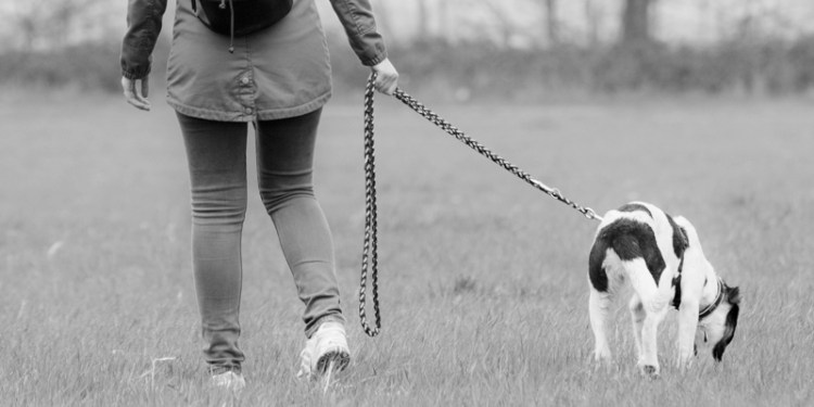 gestione cane guinzaglio banner