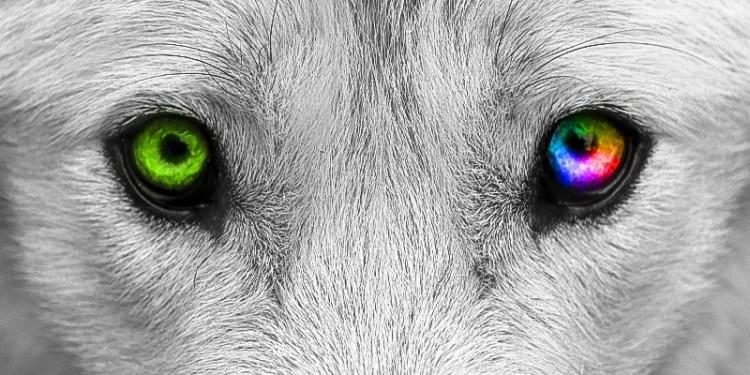 vista del cane banner
