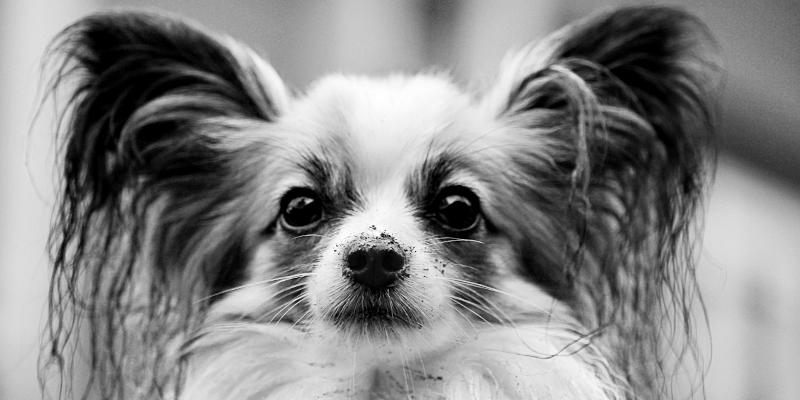 fasi di vita del cane banner