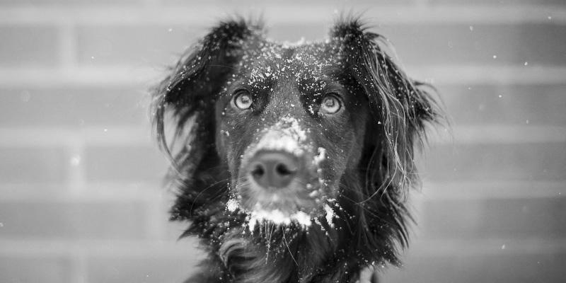 adozione cane già adulto banner