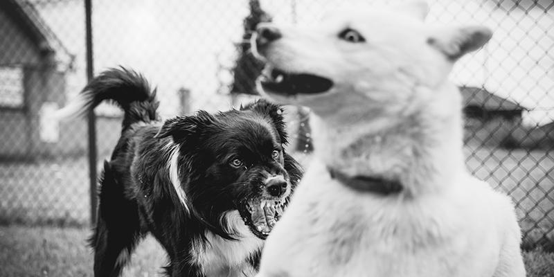 aggressività del cane banner