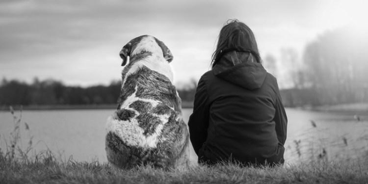 relazione con il cane banner