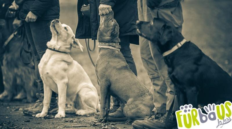 banner prova propedeutica cani da soccorso