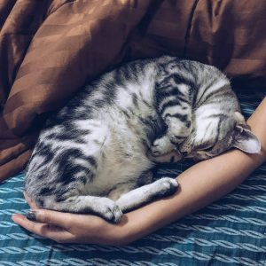 furry cat in woman's arm
