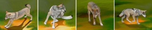 Wolf Sequence