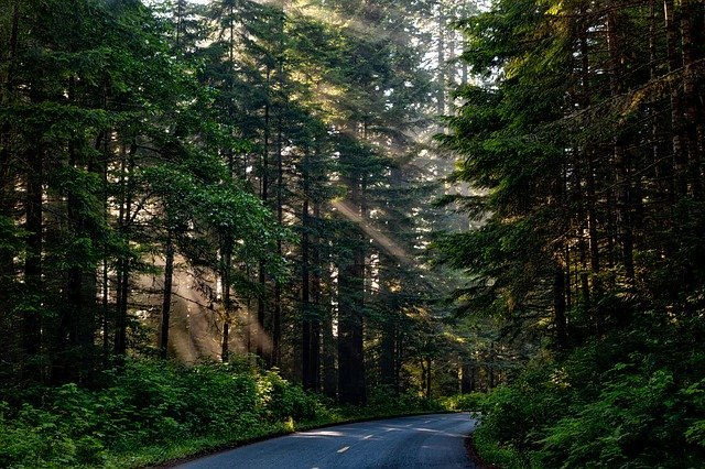 Road passing through forest environment