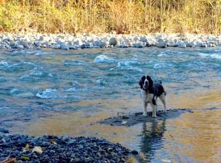 dog-river-1