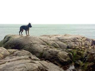 dog-rocky-beach-2