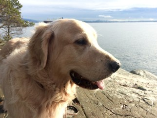 dog-rocky-beach-4