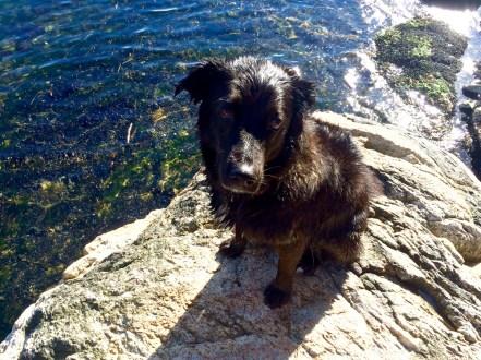 dog-rocky-beach-5