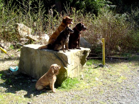 dogs-on-rock-1