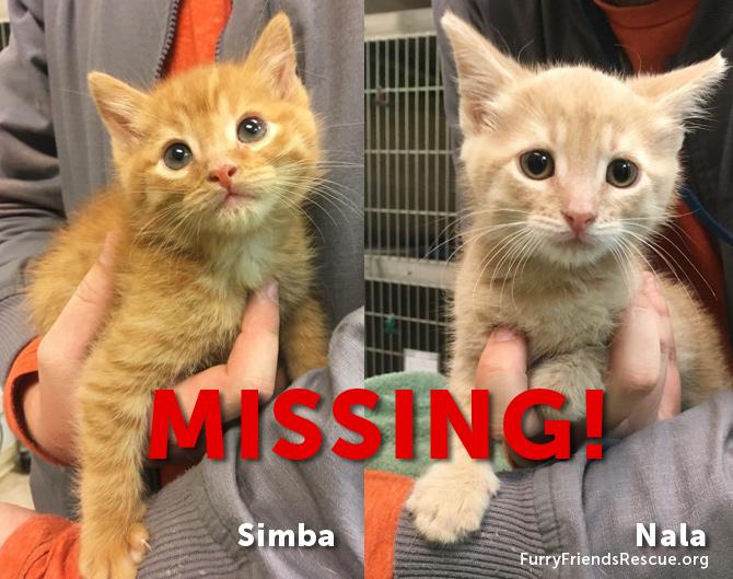 simba & Nala LOST & MISSING in San Jose - FurryFriendsRescue.org