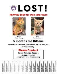 LOST Kitten Poster