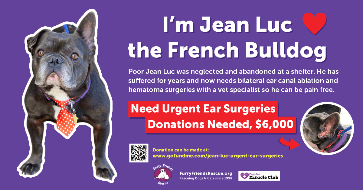 Jean Luc, French Bulldog Need urgent Ear Surgeries Donations needed, $6,000