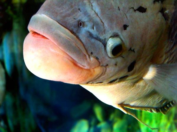 pesce animale
