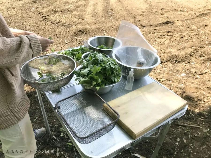 食べられる野草採り、野外で調理を楽しむ