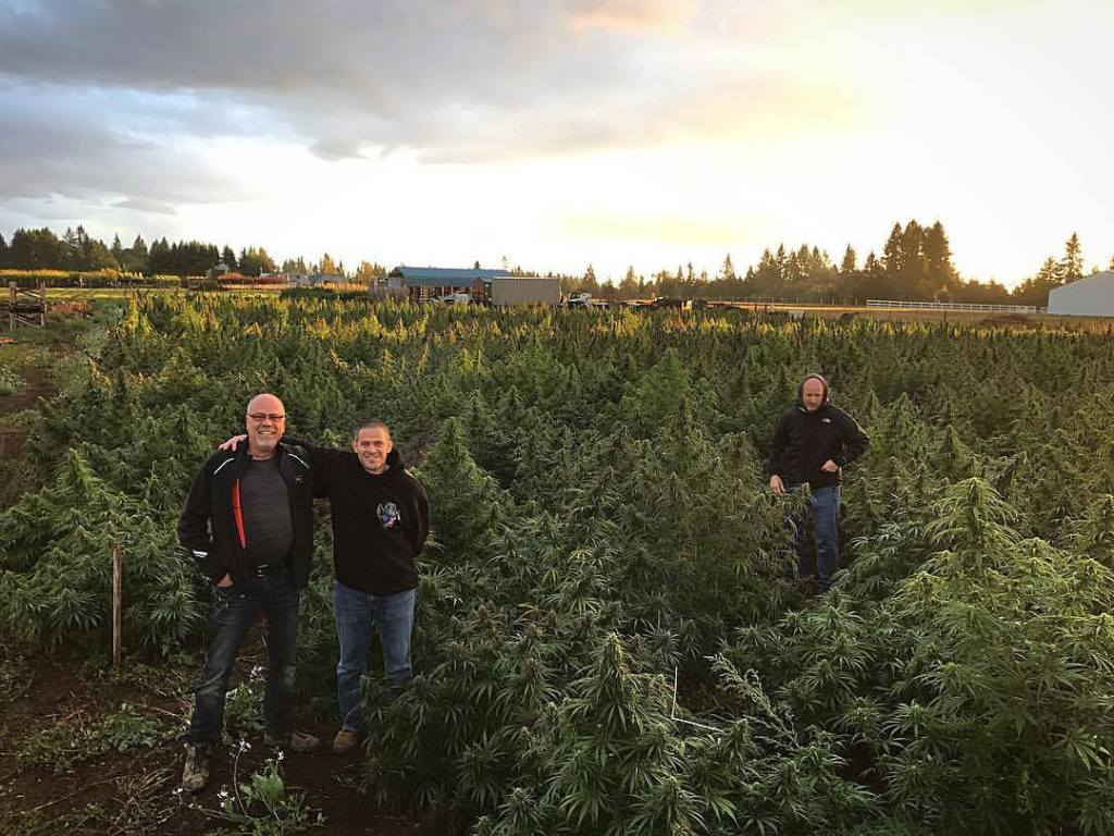 hemp farming to expand in 2019