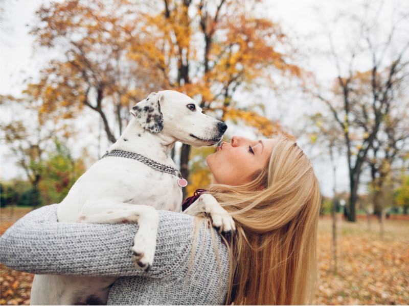 CBD for Pets — Is it Right for Fido?
