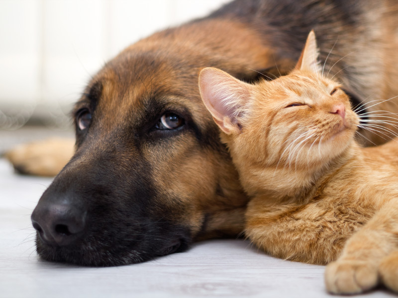Cats and Dogs Taking CBD Together – What's the Story