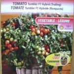 ミニトマトの逆さ栽培の結果