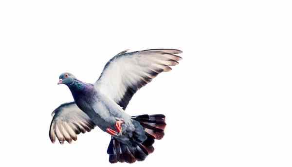 Watch Fly In Wind Gusts Birds Deform Wings