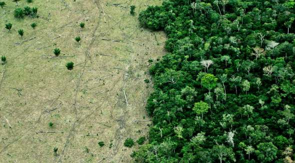 https://i0.wp.com/www.futurity.org/wp/wp-content/uploads/2017/09/deforestation-from-air_1600.jpg?resize=590%2C326&ssl=1