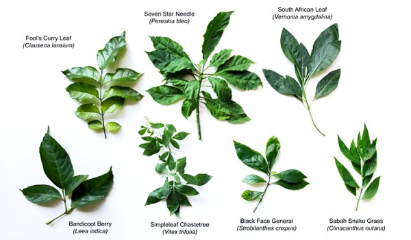 Medicinal Plants as a Cancer-Fighting Tool