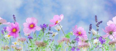 十人十色を表すたくさんの花画像