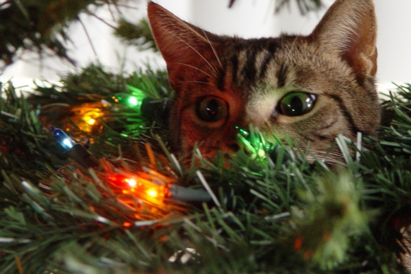Emoticons Cute Wallpaper Cats And Christmas Trees Fuzzfeed