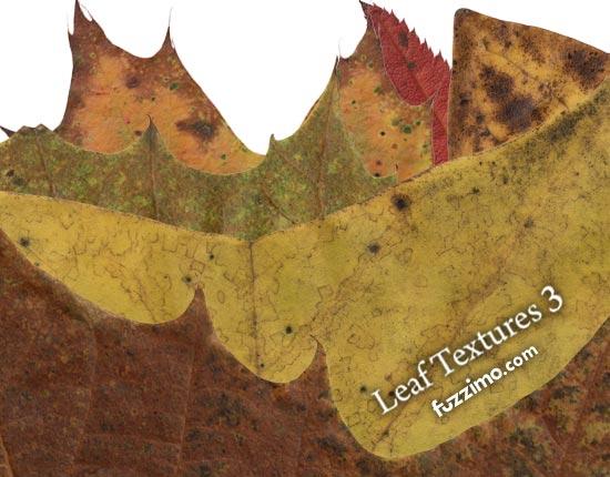 fzm-Leaf-Textures-(3)-01