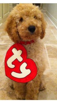 Beanie Baby Dog Costume | Fuzzy Today