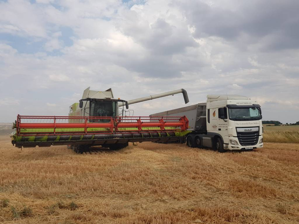 Loading grain into Matthews Cotswold Flour trailer from combine harvester