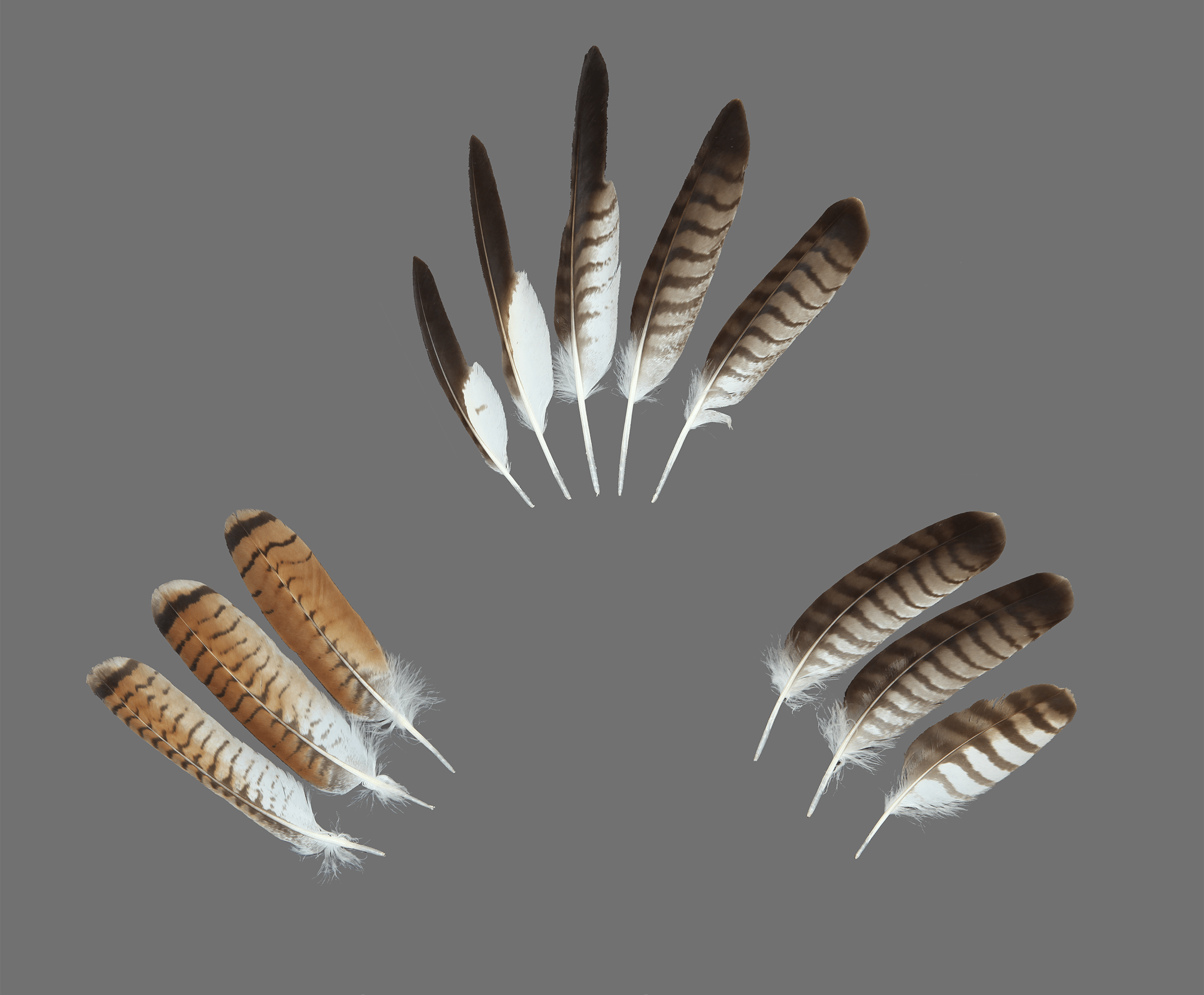 The Feather Atlas