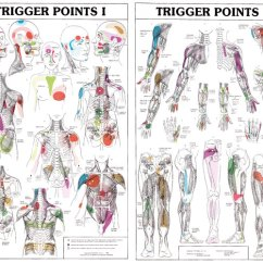 Pressure Points Diagram Massage 2010 Accord Fuse Box 27485 - Trigger Charts | Fysiomed