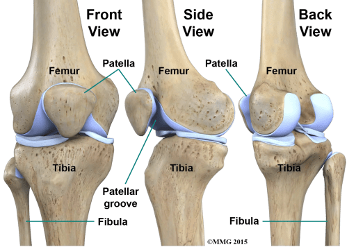 small resolution of  never really enters the knee joint it does have a small joint that connects it to the side of the tibia this joint normally moves very little