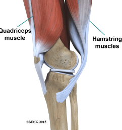 the way in which the kneecap fits into the patellofemoral groove on the front of the femur and slides as the knee bends can affect the overall function of  [ 1080 x 1080 Pixel ]