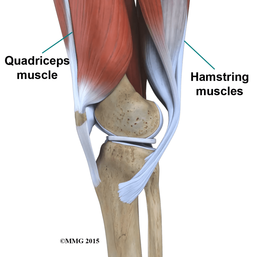 medium resolution of the way in which the kneecap fits into the patellofemoral groove on the front of the femur and slides as the knee bends can affect the overall function of