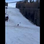 VIDEO Un urs a alergat un schior pe Pârtia Clăbucet din Predeal / Turiștii au sunat de trei ori la 112, iar jandarmii l-au scos, de fiecare dată, de pe pârtie