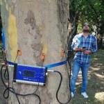 Situație absurdă la una dintre companiile Primăriei București: a plătit 150.000 de lei pentru tomografe de arbori, dar a tăiat și toaletat doar 8 copaci bolnavi. Capitala e plină de arbori uscați, la ultima furtună au fost distruse 43 de mașini