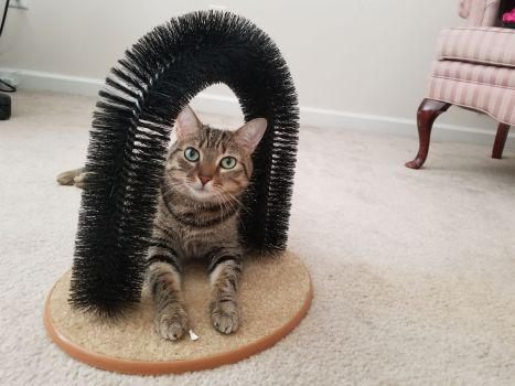 The Purrfect Arch Review