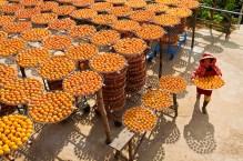 Fructele de persimmon puse la uscat