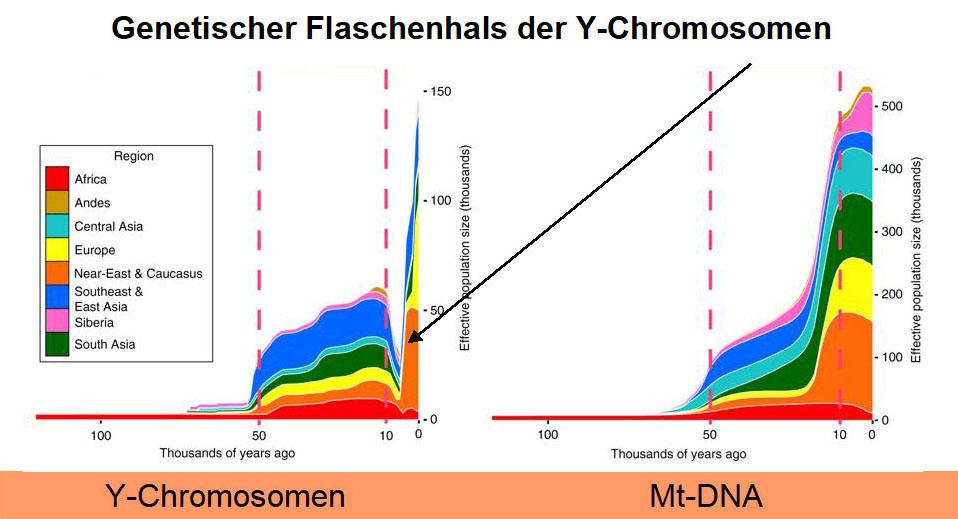 Genetischer Flaschenhals vor 7000-10.000 Jahren