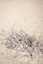 GHarhoff_Boring Brush_1606-1 thumbnail