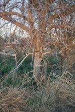GHarhoff_Boring Brush_1606-12 thumbnail