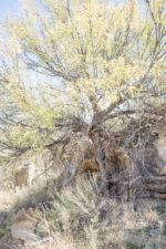 GHarhoff_Boring Brush_1606-6 thumbnail